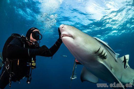 """对于""""鲨语者""""来说,下海喂鲨鱼啥的都是平常事"""