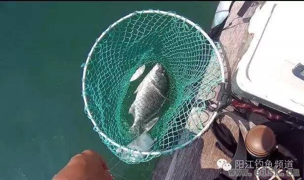 [10-30]大鱼开始往深水地方去了