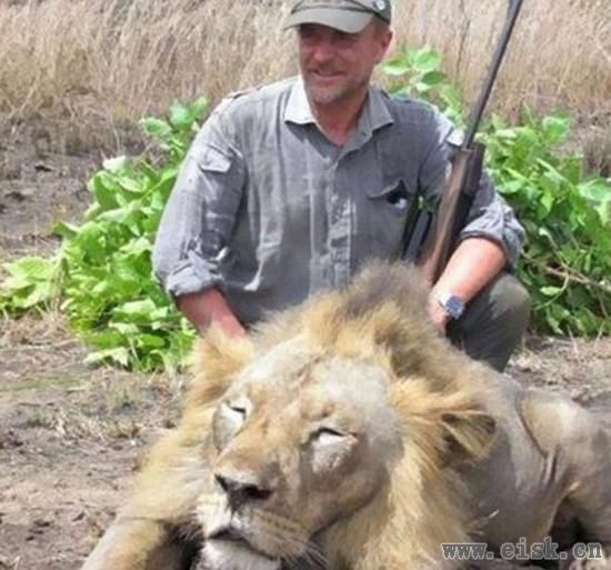 兽医猎杀狮子晒照引众怒,他最终死在了打猎路上