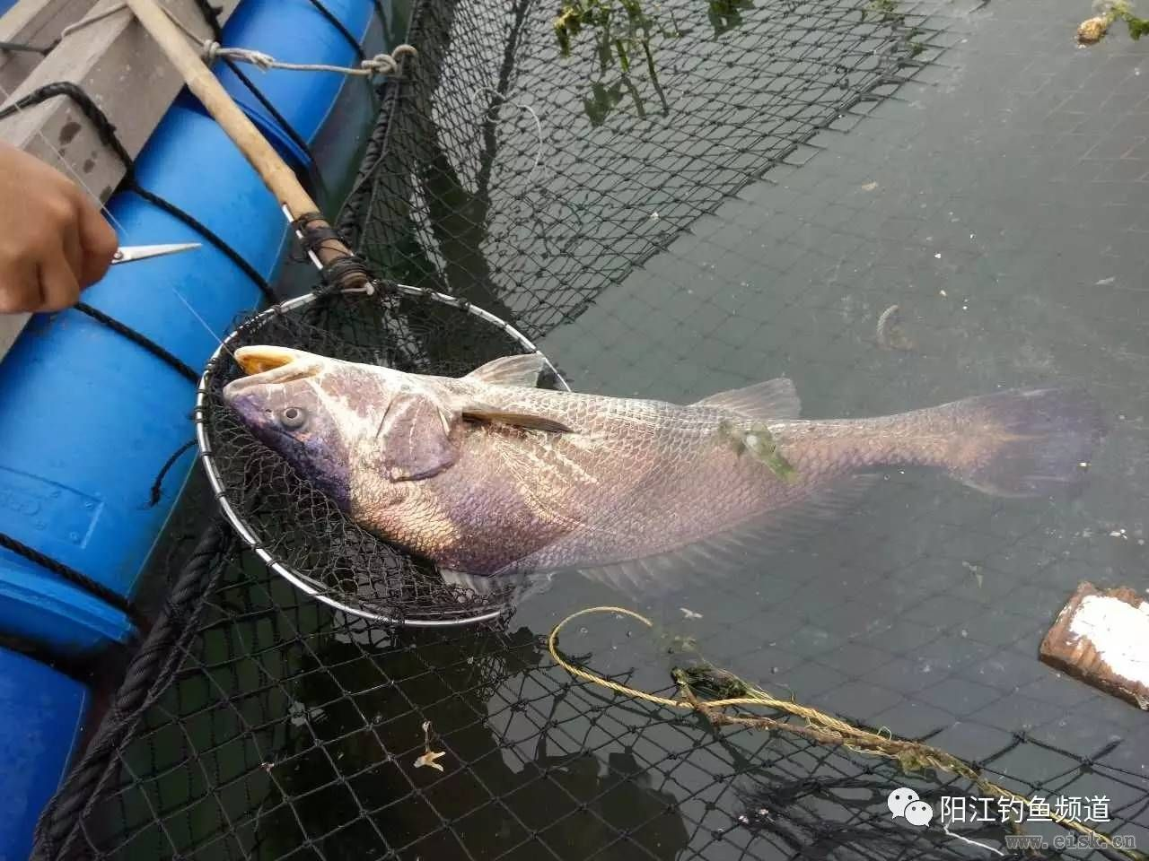 大鱼都是别人钓的 我只能钓钓小鱼