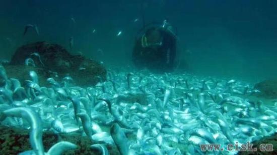 深圳海域休渔期现成片死鱼 渔政:炸鱼所致将调查