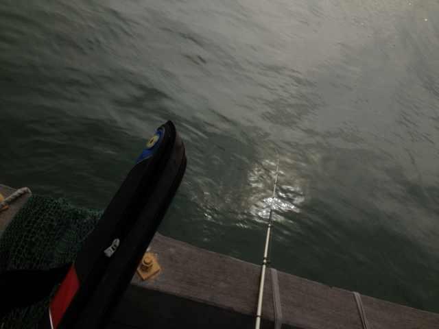 [SM]2014年2月6日闸坡鱼排收获