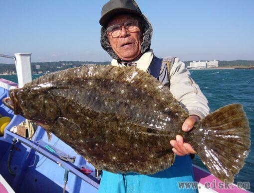 《Rapala游钓世界—日本篇》16斤的比目鱼