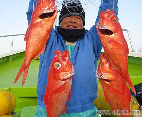 《Rapala游钓世界—日本篇》一万元的深海红鲷