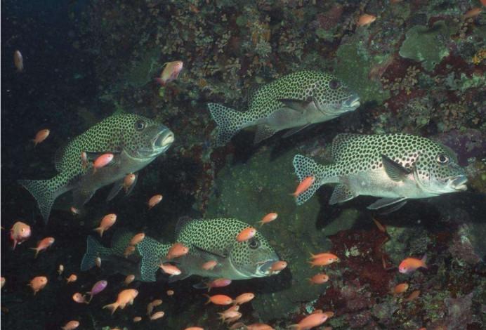 新西兰一条珊瑚鱼拍X光片, 它的舌头出现骨骼, 这是怎么回事?
